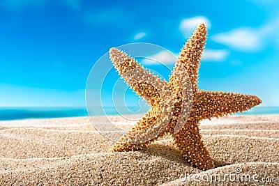 Seastar on the beach