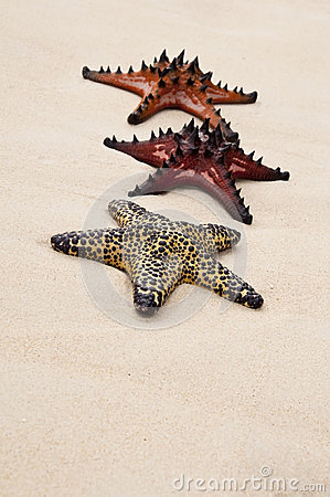 Seastar in the sand