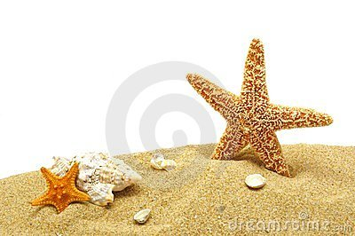 Seastar and sand bank