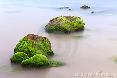 Seaweed algae on boulder like paradise island