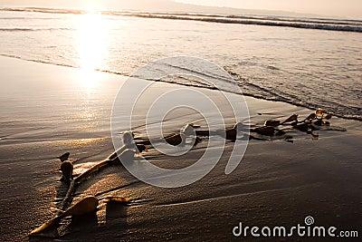 Seaweed on Beach 1