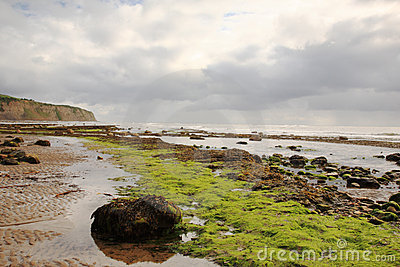 Seaweed on the beach Robin Hoods Bay