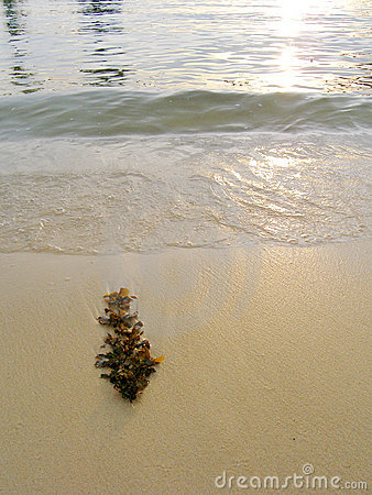 Seaweed on beach, sunset