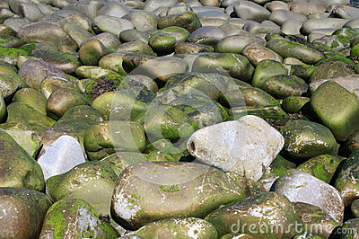 Seaweed Covered Beach Cobbles
