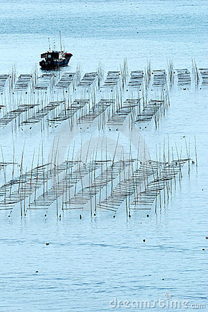 Seaweed fram