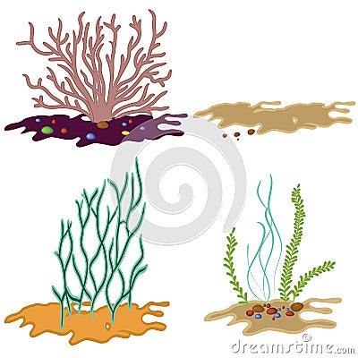 Free Seaweed Isolated On White Background Stock Image - 24974831