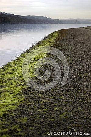 Seaweed line along pebble shor