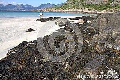Seaweed on sandy white beach
