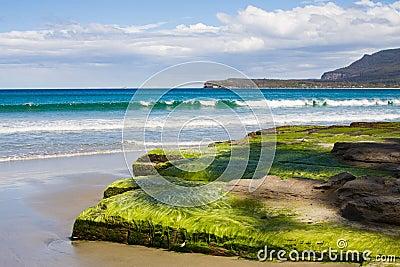 Seaweed on tessellated pavement, beach