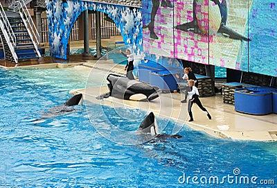 SeaWorld in San Diego Editorial Image