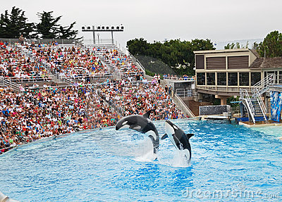 SeaWorld in San Diego Editorial Stock Photo