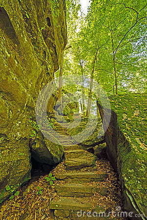 Secluded Trail in a Forest Canyon