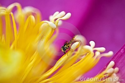 Secret of bee and bud