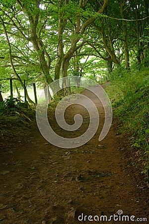 Secret Path to Mewslade