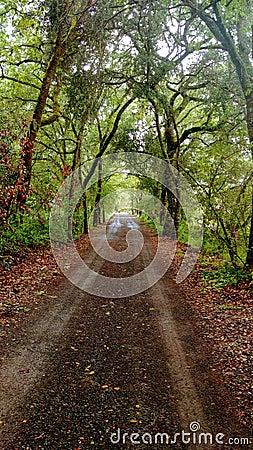 Free Secret Tree Tunnel Napa Valley Family Farm Stock Photos - 114805653