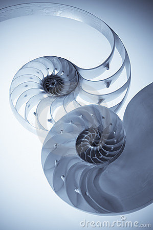 Sectional cut of a nautilus shell