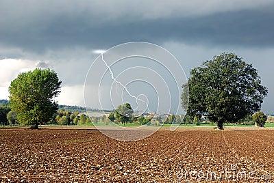Secular oak in the countryside