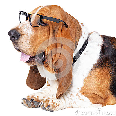Secure in his canine intellect