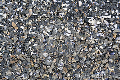 Sediment stone shells beach