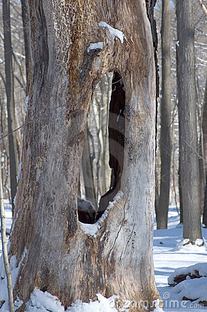See Through Tree