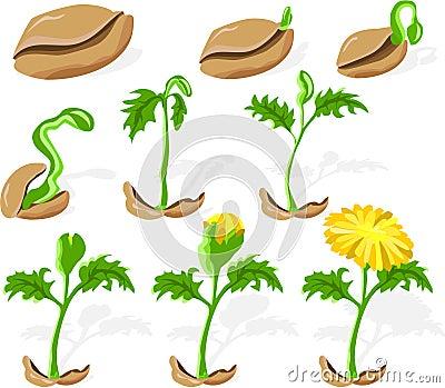 Seed 02