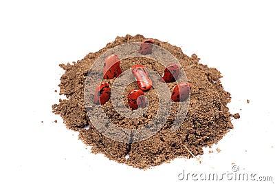Seed plantation