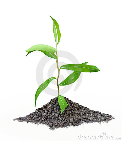 Free Seedling Royalty Free Stock Image - 1354896