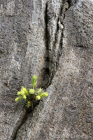 Seedling growing on a rock