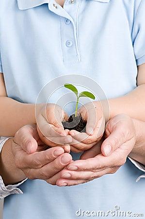 Seedling on hands