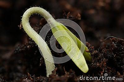 Seedling Macro