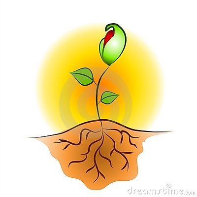 SEEDLING PLANT ROOTS CLIP ART (click image to zoom)