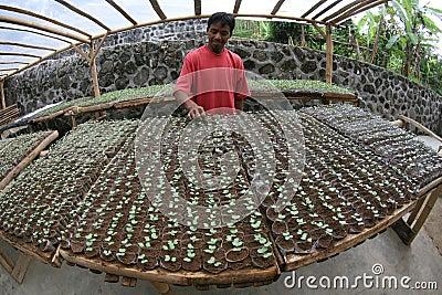 Seedlings Editorial Photo
