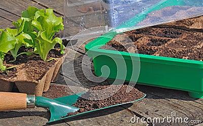 Seedlings in mini greenhouse