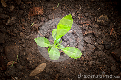 Seedlings in new life