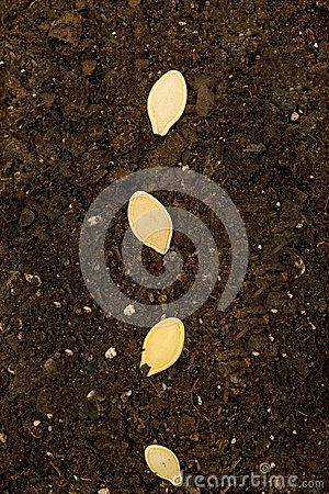 Seeds In Soil Close Up