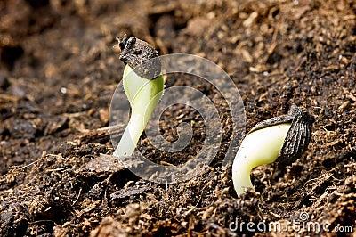 Seeds in springtime