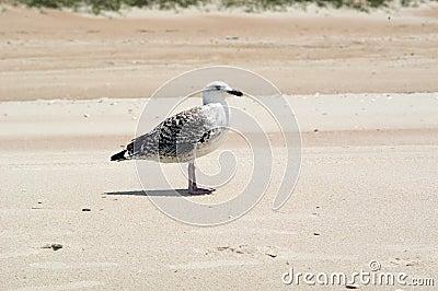 Seemöwe auf dem Strand