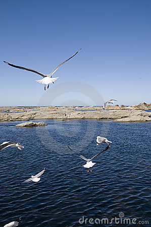 Segulls And Ocean Royalty Free Stock Photos - Image: 9935088
