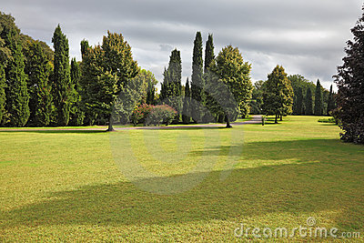 Sehr großes gelb gefärbtes Feld im Park Sigurta