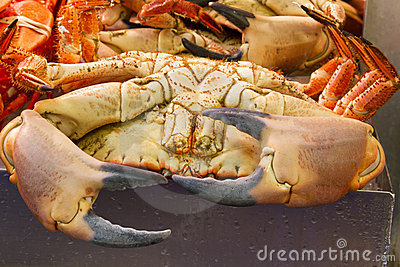 A selection of Fresh Crabs