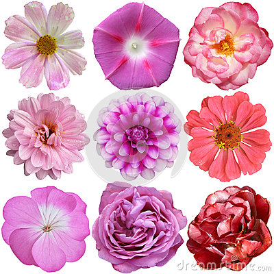 Free Selection Of Various Flowers Isolated Stock Photo - 42948410