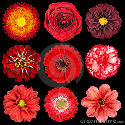 Free Selection Of Various Red Flowers Isolated On Black Stock Images - 23375564