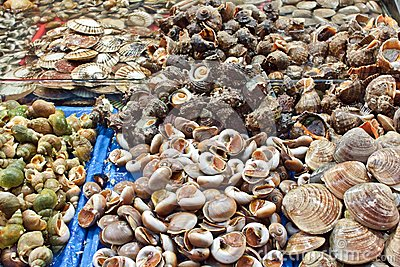 Selection of shells at seafood market