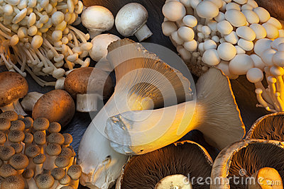 Selection of Wild Mushrooms