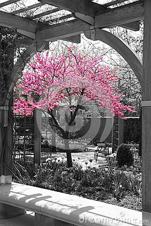 Selective Color Flowers