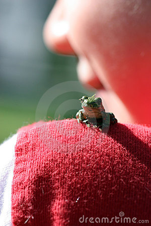 Selective focus of small frog on child s shoulder