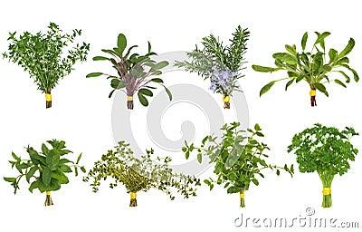 Seleção do Posy da folha da erva