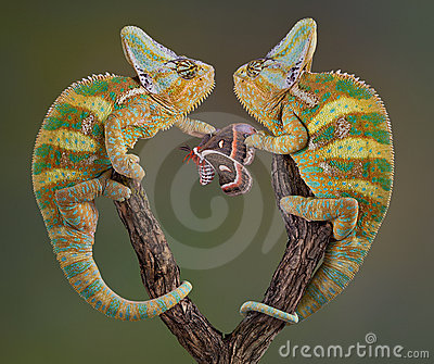 Selfish Chameleons