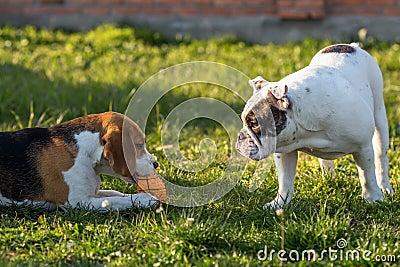 Selfish and greedy dog