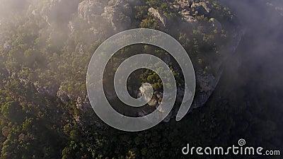 Selva de estabelecimento aérea da névoa da montanha filme